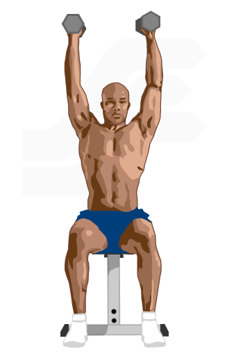 Dumbbell Shoulder Press Exercise Guide Weight Training